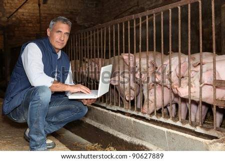 50 years old breeder with a laptop in front of pigs - stock photo