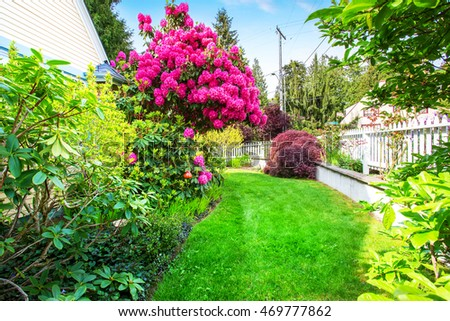 Yellow house backyard area with  blooming rhododendron and well kept lawn. Northwest, USA