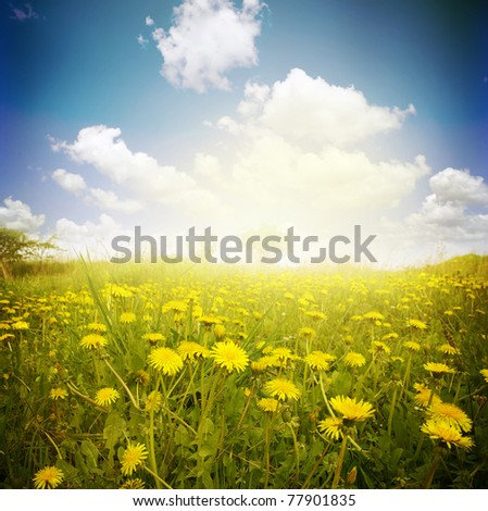 Yellow meadow under blue sky with clouds - stock photo