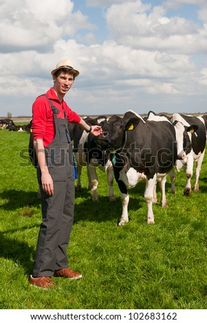 young farmer in field with livestock cows - stock photo