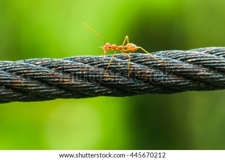 A ant is trying to fight , on steel wire and natural green background. - stock photo