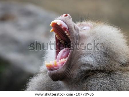 motion postponement moving movement fight fighting animal teeth ...