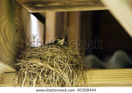 A baby bird waits in a nest. - stock photo