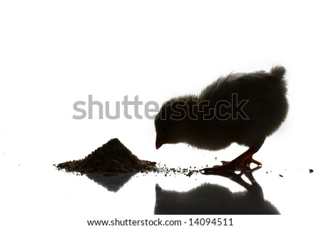 a baby chick silhouette over a white background