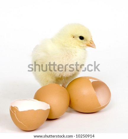 A baby chick stands next to broken brown eggs on a white background