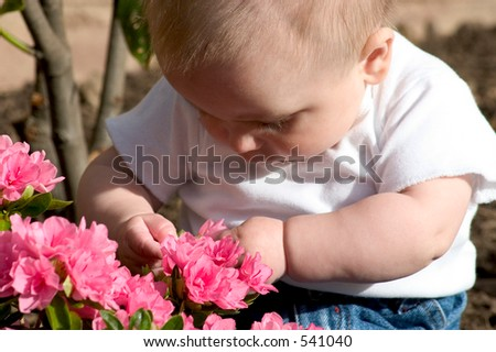 a baby examining flowers - stock photo