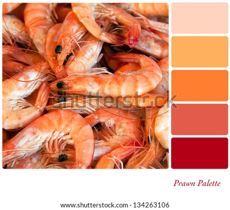 A background closeup of fresh prawns in a colour palette with complimentary colour swatches. - stock photo