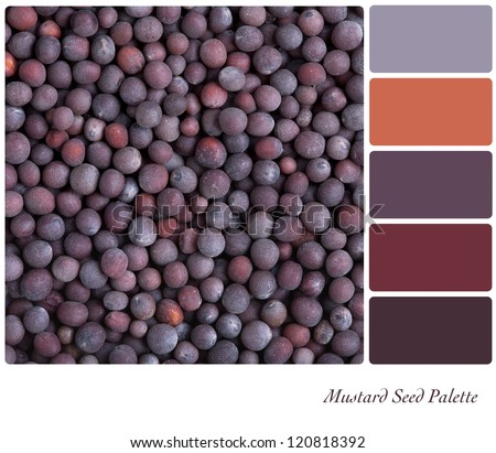 A background of black mustard seeds palette with complimentary colour swatches - stock photo