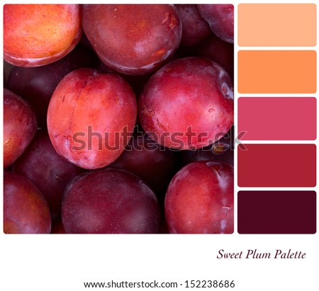 A background of fresh red plums in a colour palette with complimentary colour swatches - stock photo