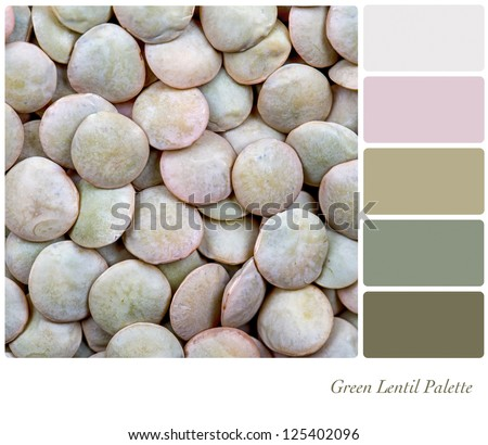 A background of green lentils. Colour palette with complimentary colour swatches - stock photo