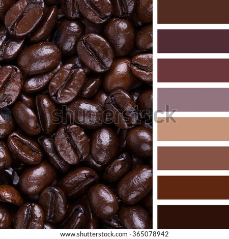 A background of Italian Roast coffee beans. In a colour palette with complimentary colour swatches.