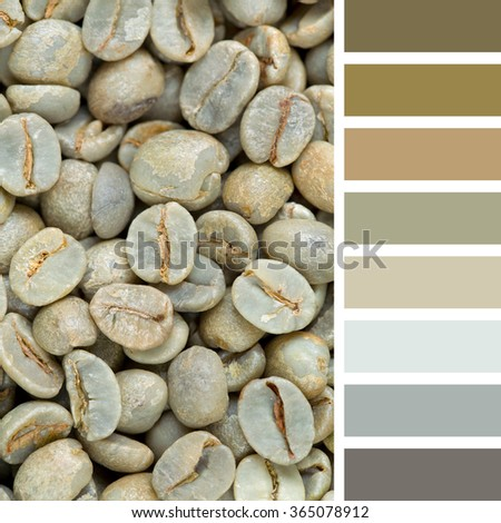 A background of raw green coffee beans. In a colour palette with complimentary colour swatches. - stock photo