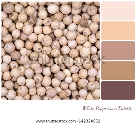 A background of white peppercorn in a colour palette, with complimentary colour swatches. - stock photo