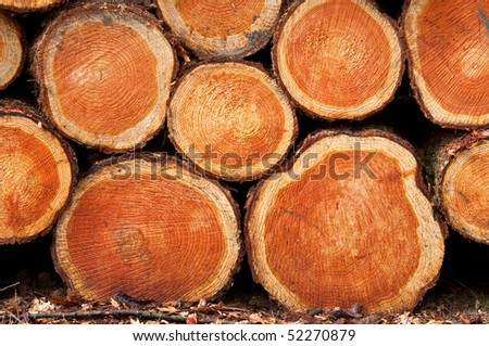 a background of wood-piles - stock photo