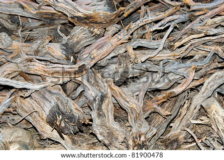 A background of wood stock - stock photo