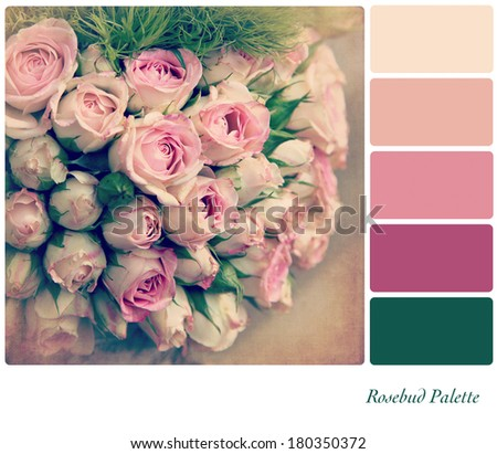 A background pale pink rosebuds in a colour palette,  with complimentary colour swatches. Textured retro style effect. - stock photo
