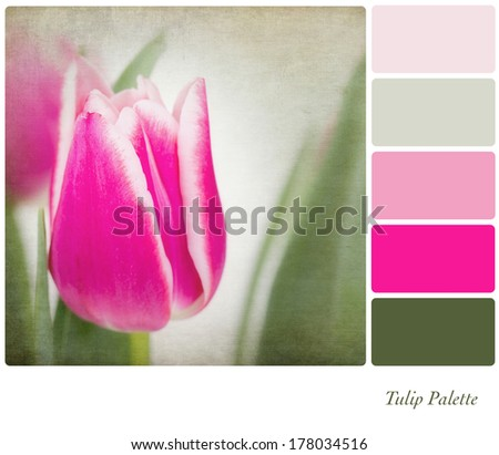 A background tulip flowers in a colour palette,  with complimentary colour swatches. Textured retro style effect. - stock photo