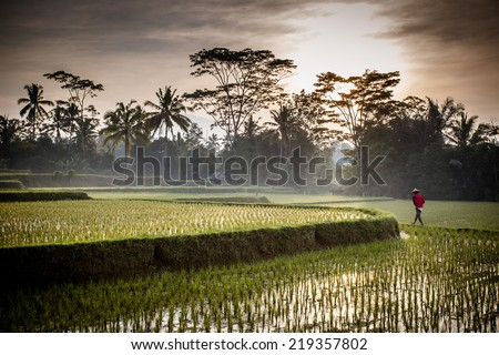 A Balinese rice farmer goes to work early in the morning near Ubud, Bali, Indonesia. - stock photo