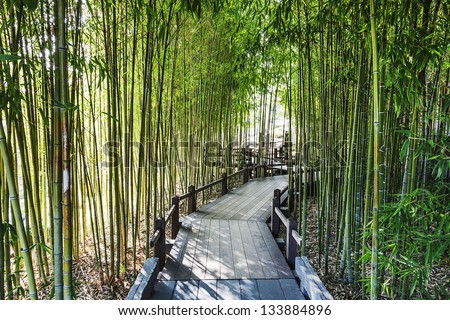 A Bamboo Garden with a Wooden Walkway