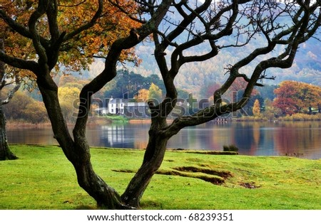 A bare tree and a house on the shore of Derwentwater in the English Lake District - stock photo
