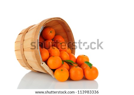 A basket of Clementine Mandarin Oranges tipped on its side with fruit spilling onto the surface. Vertical format over a white background with reflection. - stock photo