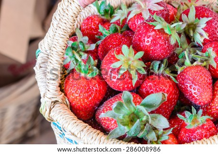 A basket of fresh organic strawberries. These strawberries are handpicked from an organic farm in Puyallup, Washington State, US.  - stock photo