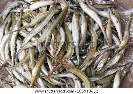 A basket of needlenose gar fish, latin name  -  xenentodon cancila, for sale on a market stall in Cambodia. Caught a few hours earlier in the Tonle Sap lake. - stock photo
