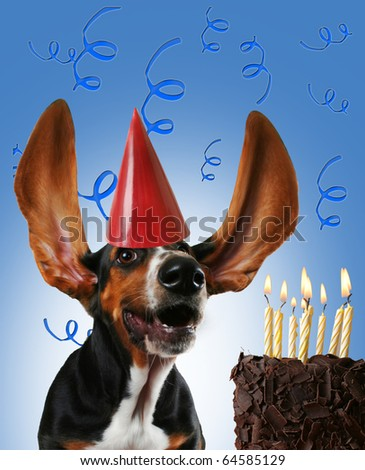 a basset hound with a cake - stock photo