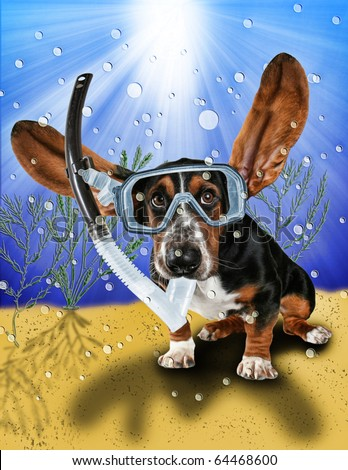 a basset hound with long flying ears - stock photo