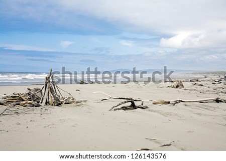 A beach view with dry woods