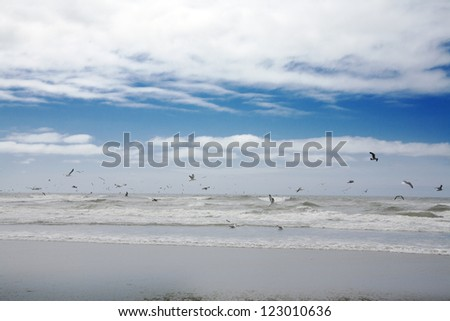 A beach view with sea gull flying