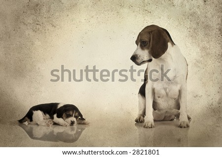 A beagle mom after is pregnancy looking to her puppy (Grunge background added) - stock photo