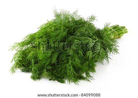 A beam of fresh green leaves of dill