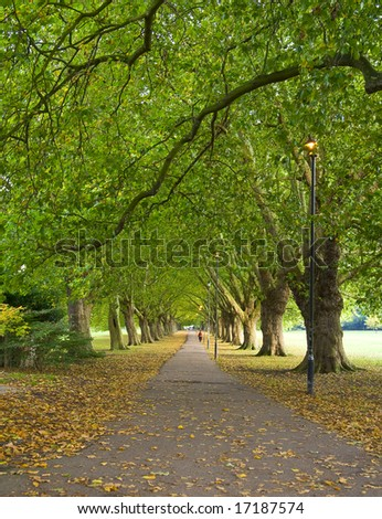 A beatiful pathway under the trees of Cambridge. - stock photo