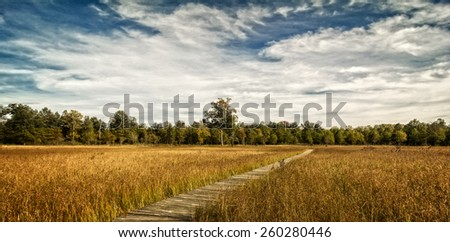 A  beautiful autumn scene along a winding wood boardwalk with colorful leaves of autumn in the distant trees to look at. Find this boardwalk at Irwin Prairie State Nature Preserve in Northwest Ohio. - stock photo