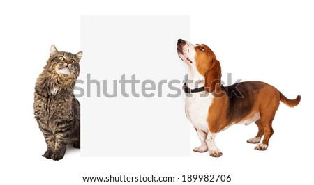 A beautiful Basset Hound dog and a pretty tabby cat standing next to a blank white sign to add your marketing message to. - stock photo