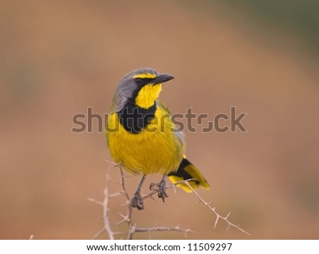 A beautiful Bird found in remote areas - stock photo