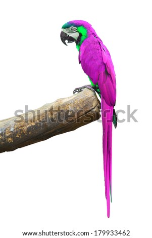 A beautiful bird Pink Macaw isolate on white background.  - stock photo