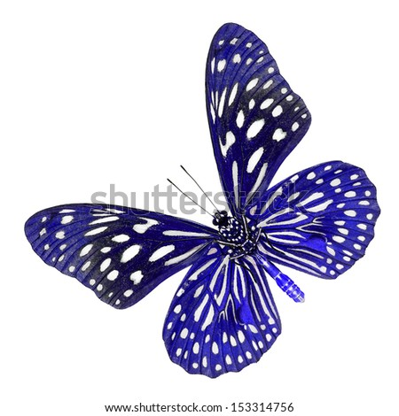 A beautiful blue butterfly isolate on white background.