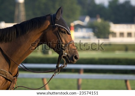 A beautiful  brown horse on the Saratoga Race Tracks backstretch in the early morning light - stock photo