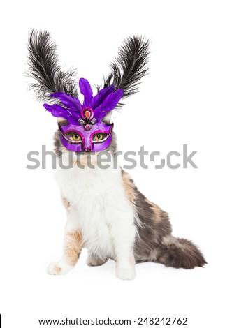 A beautiful Calico cat wearing a purple Mardi Gras feather mask - stock photo