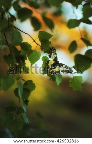 A Beautiful Eastern Tiger Swallowtail Butterfly sitting on green leafs - stock photo