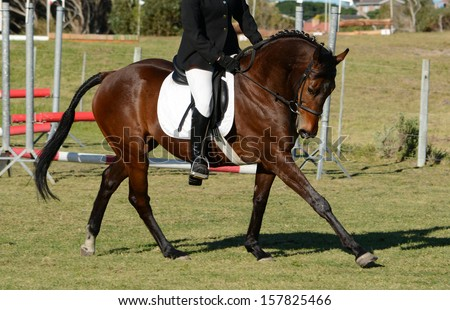 A beautiful elegant dark bay sports horse with rider in show jumping and dressage training in the arena.