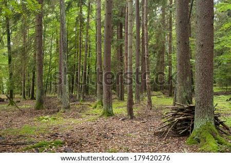 A Beautiful Forest in Bavaria, Germany on a Summer Day - stock photo