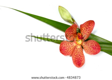 A beautiful fresh orchid on white background