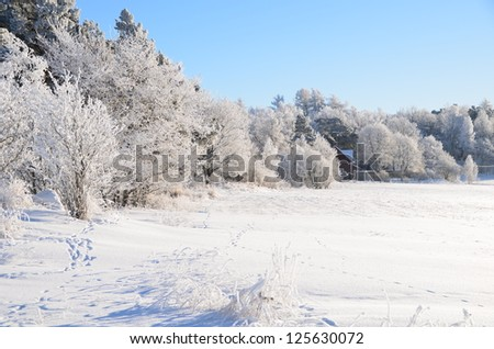 A beautiful frosty landscape in winter - stock photo