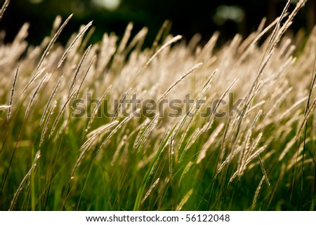 A beautiful grass field in the rural area of Thailand. - stock photo