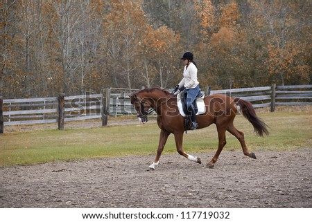 A beautiful hanoverian horse and his rider out for some exercise in the ring on a cool fall day. - stock photo