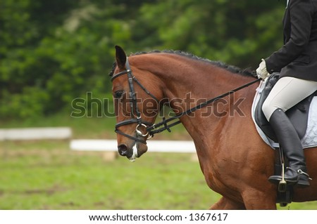A beautiful horse during a competition