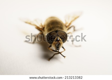 A beautiful Hoverfly isolated on a white background